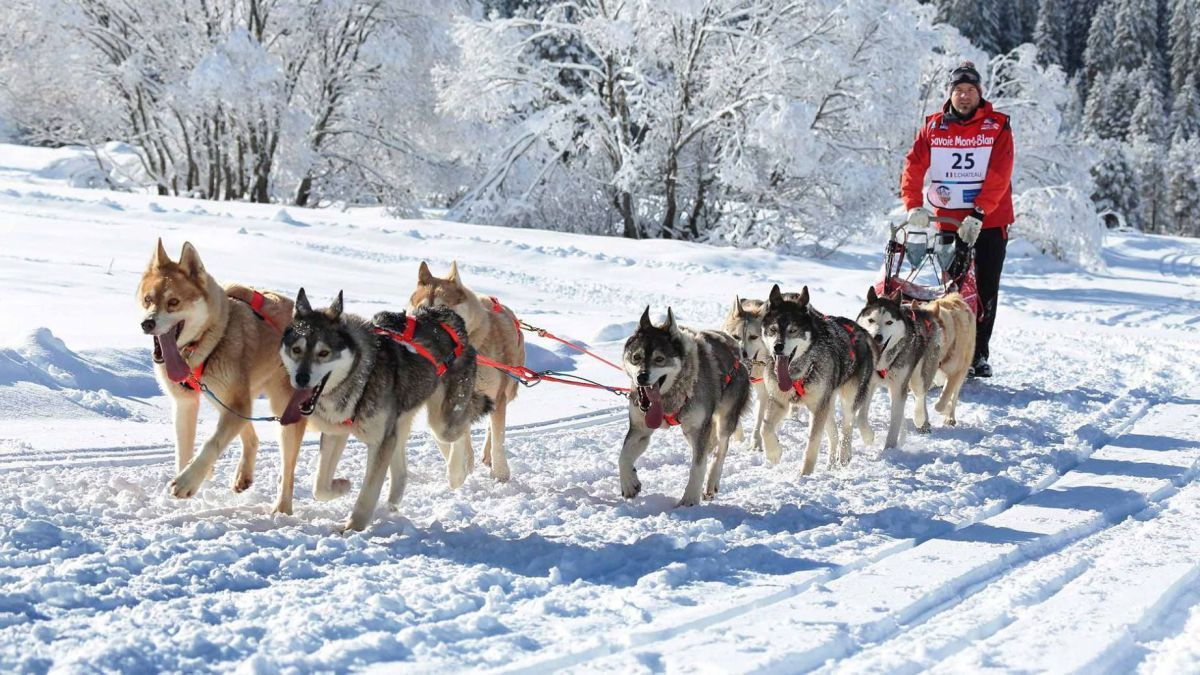Dog Sledding Morzine